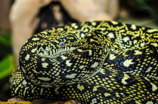 snake-zoo-macro-animal-67300.jpeg